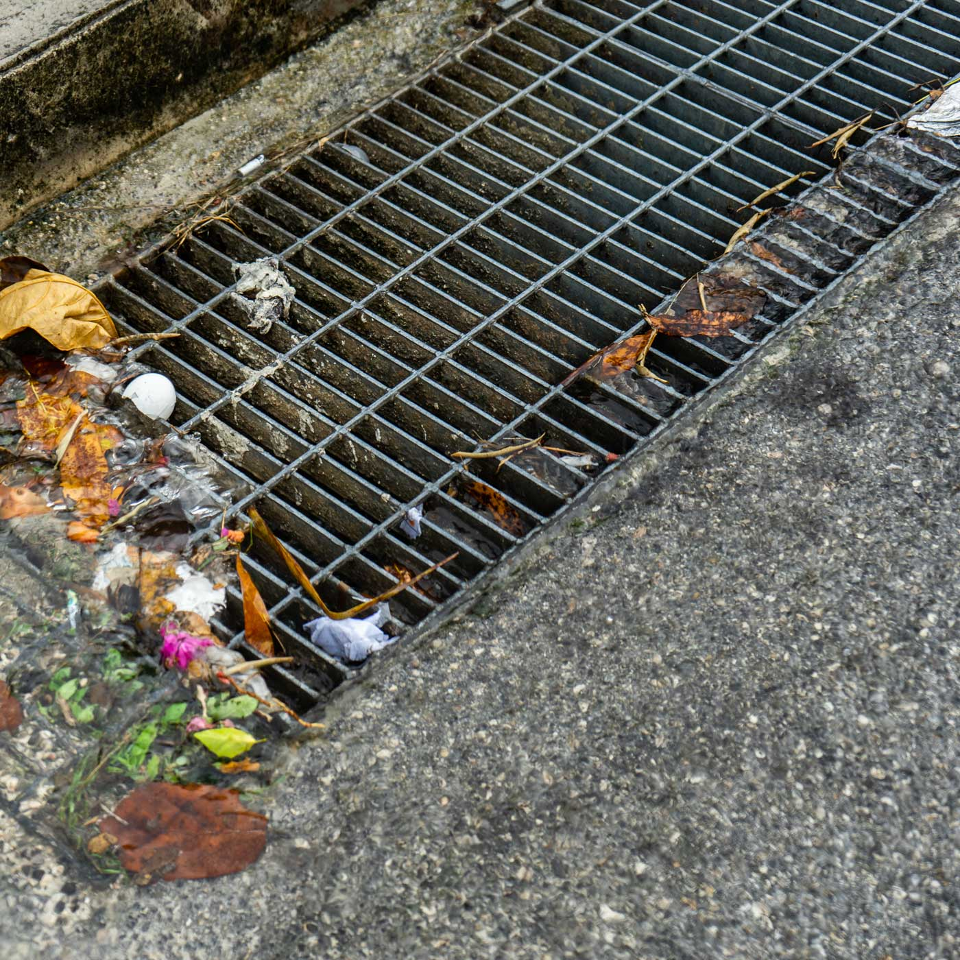 storm drain grate with rubbish
